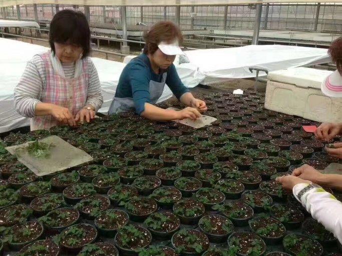 女36岁~花卉种植,3年项目